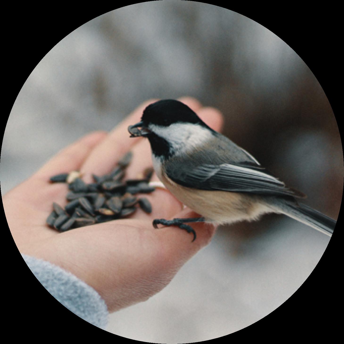 sezione uccellini