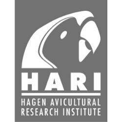 31 HARI